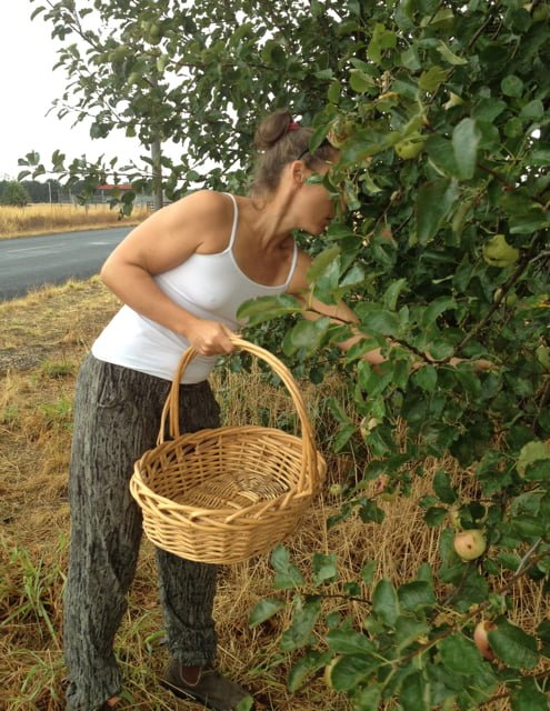 applepicking1(2).jpg